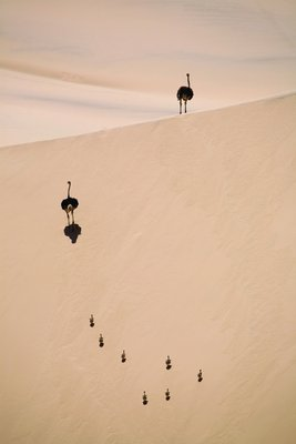 Sand sprinters by Dan Mead - print