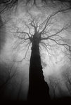 Beech in the mist by Luca Fantoni & Danilo Porta - print