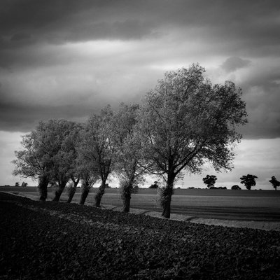 Walsham Le Willows, Suffolk, 2009 by Paul Cooklin - print