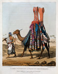 Camel Conveying a Bride to her Husband Poster Art Print by Carl Haag