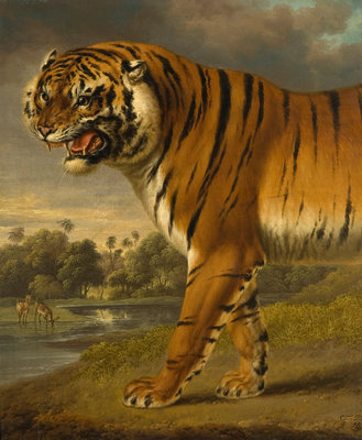 A Tiger, 1818 by Charles Towne - print