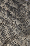 A Pecopteris plumosa plant fossil, Carboniferous Period. by Unknown - print