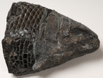 Fossilised fish by unknown - print