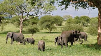 Zoologist-wildlife-biologist