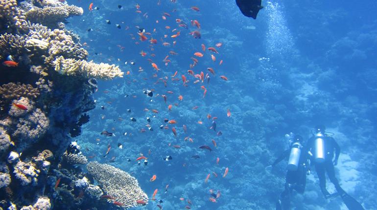 Fish-wildlife-management