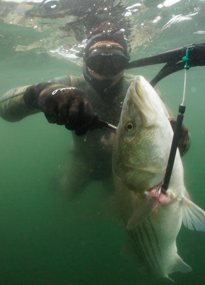 Darvil McBride - Expert Spearfisherman