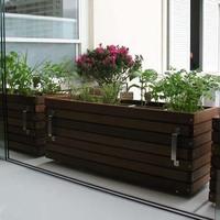 Horta medicinal em casa
