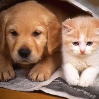 Conviver com cães evitaria algumas infecções em bebês!!!
