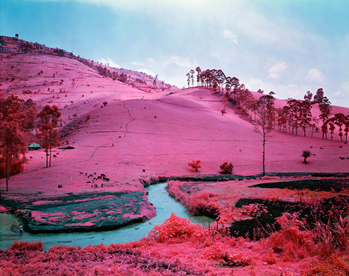 Richard-mosse_infra_photography_congo_yellowtrace_01