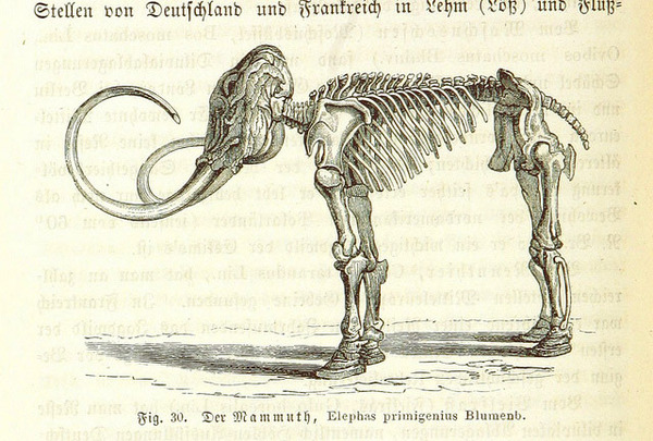 Mammoth-skeleton_large