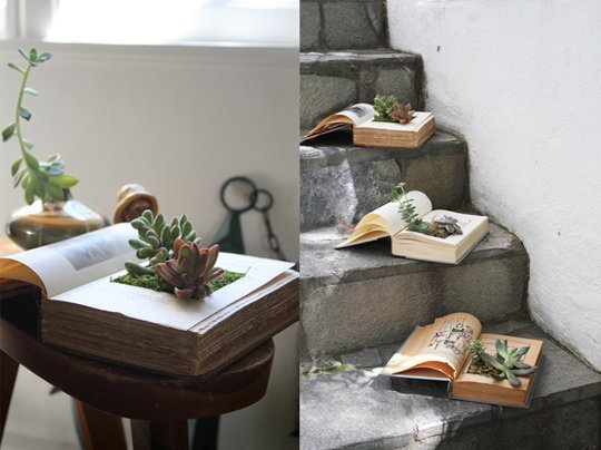 Book Succulents