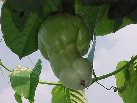 funny fruits: frisky garden vegetables: a collection of scandalous produce