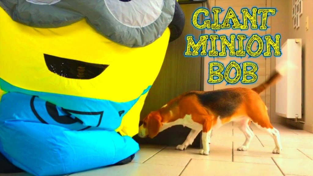 "FUNNY DOGS Vs MINION ""GIANT INFLATABLE BOB""! Part 4"