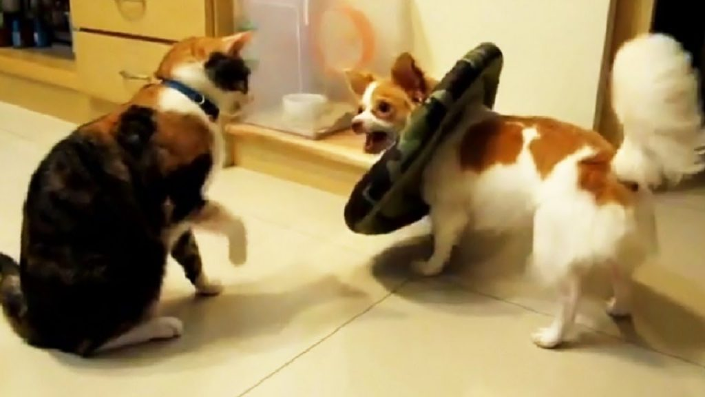 Funny Dogs Annoying Cats Compilation, Try Not To Laugh Dogs and Cats Videos, Animals TV