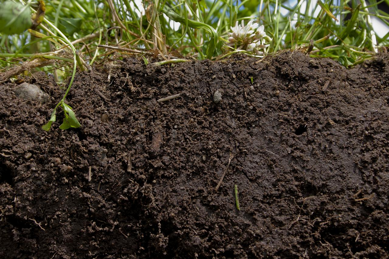 Globs of glomalin, carbon rich chunks of soil, are produced by myco fungi resulting in rich, tilthy soil. (Photo: NRCS Soil Health CC-BY-2.0)
