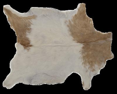 Goat-hide-jayson-home