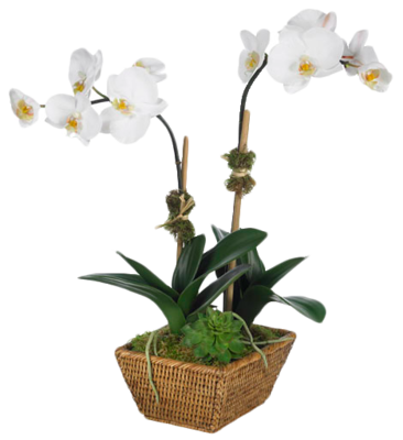 Orchid-diane-james-home