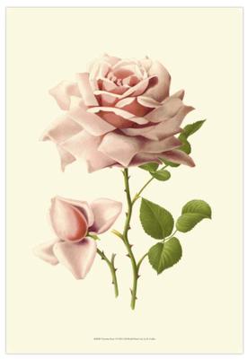 Victorian-rose