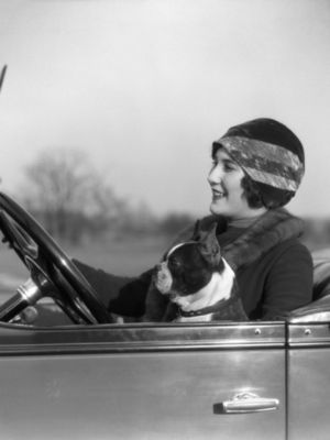 H-armstrong-roberts-woman-at-steering-wheel-driving-car-with-boston-terrier-passenger_i-g-56-5634-qzemg00z