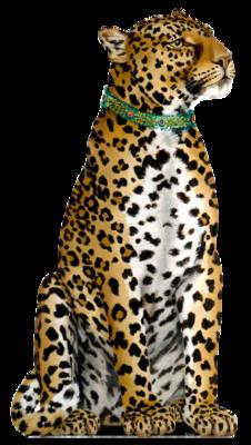Leopard-katherine-barnwell