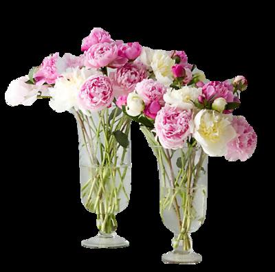 Vase-terrain