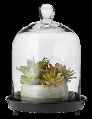 Glass-cloche