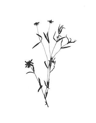 Mcarameros_botanicalno2