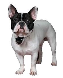 Dog-video-camera-2