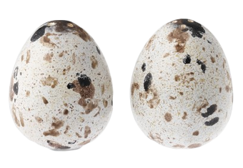 Egg-salt-and-pepper-shakers-williams-sonoma