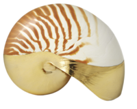 Aerin-shell