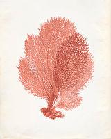 Vintage-coral-print-esty