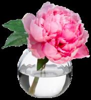 Pink-peony-blossom-diane-james-home