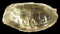 Gold-turleshell-paperweight-furbish