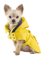 Dog-raincoat-ralph-lauren