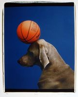 William_wegman