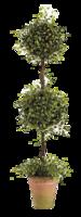 Topiary-ballard-designs