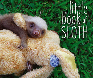 A-little-book-of-sloth-by-lucy-cooke-m