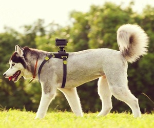Action-cam-dog-mount-m