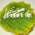 Ad-campaign-for-plant-for-the-planet-uses-cut-leaf-art-s