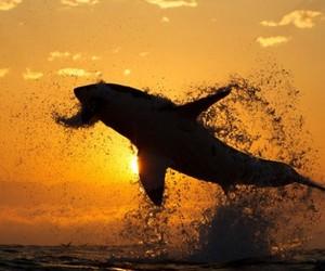 Air-shark-m