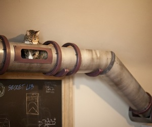 Awesome Steampunk Cat Transport Tube