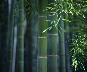 Bamboo-in-construction-m