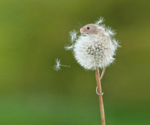 Beautiful Photos of Mouse Who Climbed Up a Dandelion