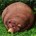 Big-sleeping-grizzly-bear-bean-bag-s