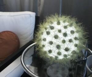 Cactus-lamp-m