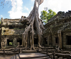 Cambodian-temple-of-ta-prohm-m
