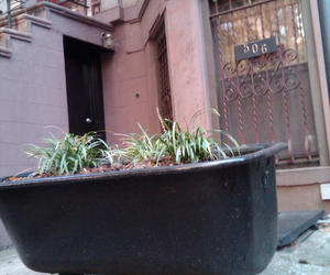 Claw-foot-tub-garden-in-brooklyn-m