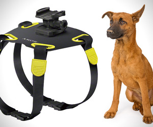 Dog-harness-camera-mount-sony-m
