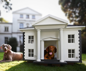 Dog-homes-by-best-friends-homes-m