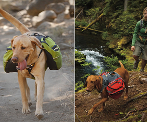 Dog-packs-by-ruffwear-m